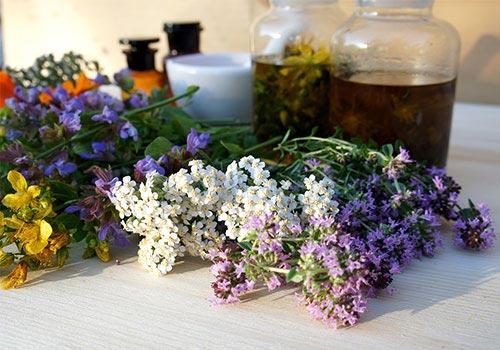 Plantes médicinales Pharmacie Orléans à Saumur